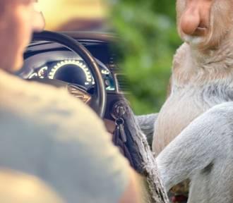"""Czy jesteś """"Januszem"""" za kierownicą? Sprawdź jakim typem kierowcy jesteś! [TEST]"""