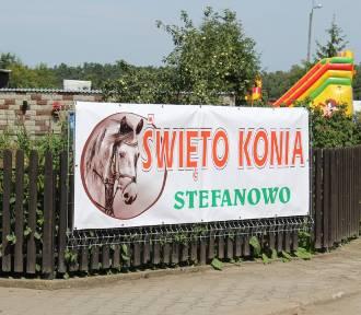 Święto Konia w Stefanowie - ZAPOWIEDŹ