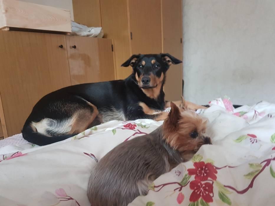 Przygarnęli dwa psy w potrzebie. Teraz sami potrzebują naszego wsparcia