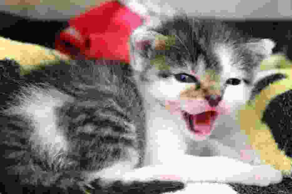 Chcecie zaopiekować się malutkimi kociakami? Schronisko w Poznaniu poszukuje chętnych!