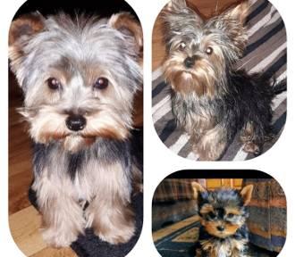 Dzień Kundelka. W Kaliszu mamy mnóstwo wspaniałych psiaków. Zobaczcie sami. ZDJĘCIA