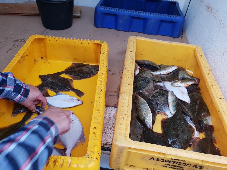 - Zdjęcia ryb, którymi dysponuje Nasza Ziemia budzą sporo obaw i jeszcze więcej pytań - mówi prezes Marcin Buchna