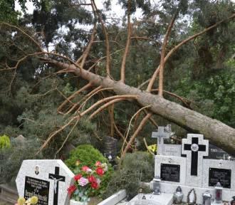 Spustoszone Mikołajki Pomorskie, Dzierzgoń oraz okoliczne miejscowości. Połamane drzewa i