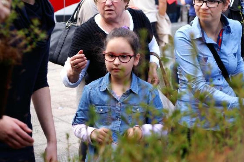 Nadleśnictwo Bartoszyce rozdało sadzonki modrzewia