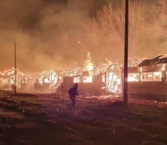 Pożary, wypadki, na ratunek zwierzętom. Tak wygląda praca strażaków