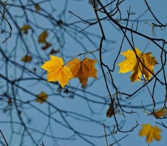 Czy wróci jeszcze złota, polska jesień? Sprawdź prognozę pogody