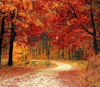 Wrocław. Powiało chłodem. Jaka będzie jesień? Czy będzie jeszcze ciepło? (PROGNOZA)