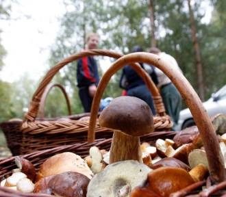 Wybierając się na grzyby możesz natknąć się na strażników leśnych