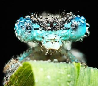 Oko w oko z owadem. Zobacz niezwykłe zdjęcia fizjoterapeuty ze Świdnicy