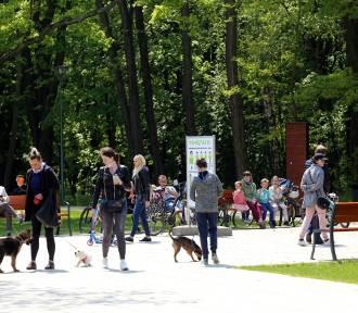 Park Zielona w Dąbrowie Górniczej. Tłumy w jednym z najładniejszych parków w regionie