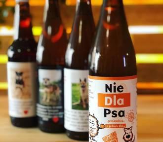 Kupując piwo, pomożesz czworonogom z ostrowskiego schroniska!
