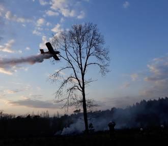 Pożar lasu. Z ogniem walczyli strażacy z siedmiu jednostek