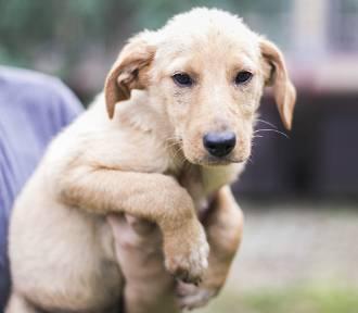 Te słodkie psiaki czekają na kochający dom! Może Ty je przygarniesz? [GALERIA]