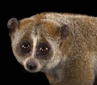 Z miłości do zwierząt. Niezwykłe portrety gatunków zagrożonych. Spójrz im w oczy