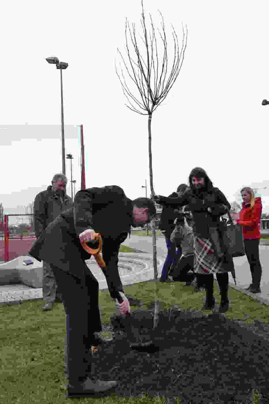 1000 drzew dla Rybnika