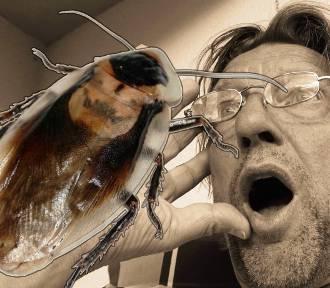 Takie obrzydlistwa mieszkają w twoim domu. Te insekty mogą uprzykrzać tobie życie