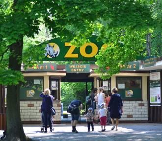 Zoo zamknięte na dłużej. Powodem trudna sytuacja epidemiologiczna oraz braki kadrowe