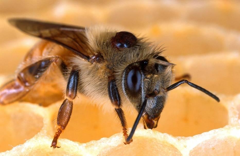 Światowy Dzień Pszczół - 20 maja