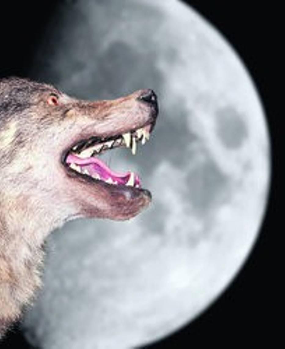 Czy wpływ na katastrofy może mieć odległość Księżyca od Ziemi?