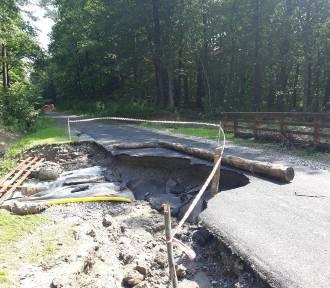 Duże szkody po powodziach w lasach. Przewrócone drzewa, osuwiska, zniszczone drogi  [ZDJĘCIA]
