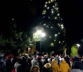 W Kowarach świąteczne lampki zapłonęły na 200-letnim cyprysiku nutkajskim!