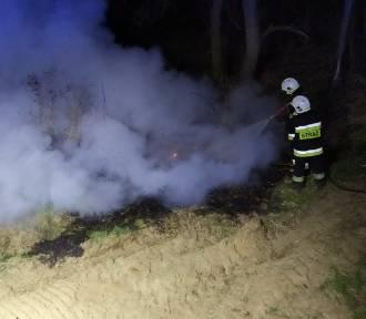 Paliła się trawa nad Prosną