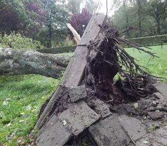Noc huraganowa w Ustce. Zobacz połamane konary i powalone drzewa