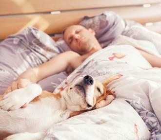 Oto najbardziej leniwe rasy psów
