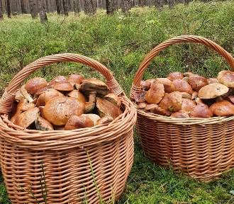 Niesamowite okazy grzybów. Czytelnicy chwalą się nowymi zdjęciami!