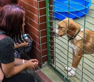 Schronisko dla Zwierząt wstrzymało spacery z psami i adopcje zwierząt. Co się stało?