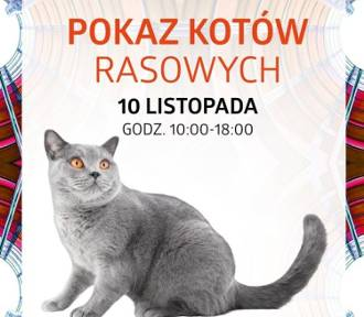 10 listopada Pokaz Kotów Rasowych w Silesia City Center