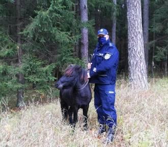 Policjanci łapali kucyka