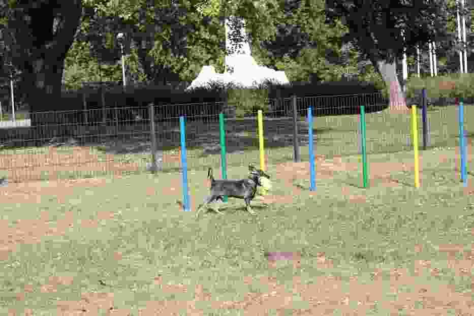 Powstał pierwszy miejski wybieg dla psów