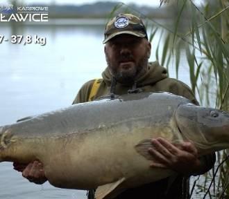 Karp ważył 37,8 kg! To nowy rekord Polski [Zdjęcia] - wędkarstwo