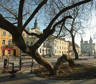 Czas na zgłoszenie wyjątkowych drzew