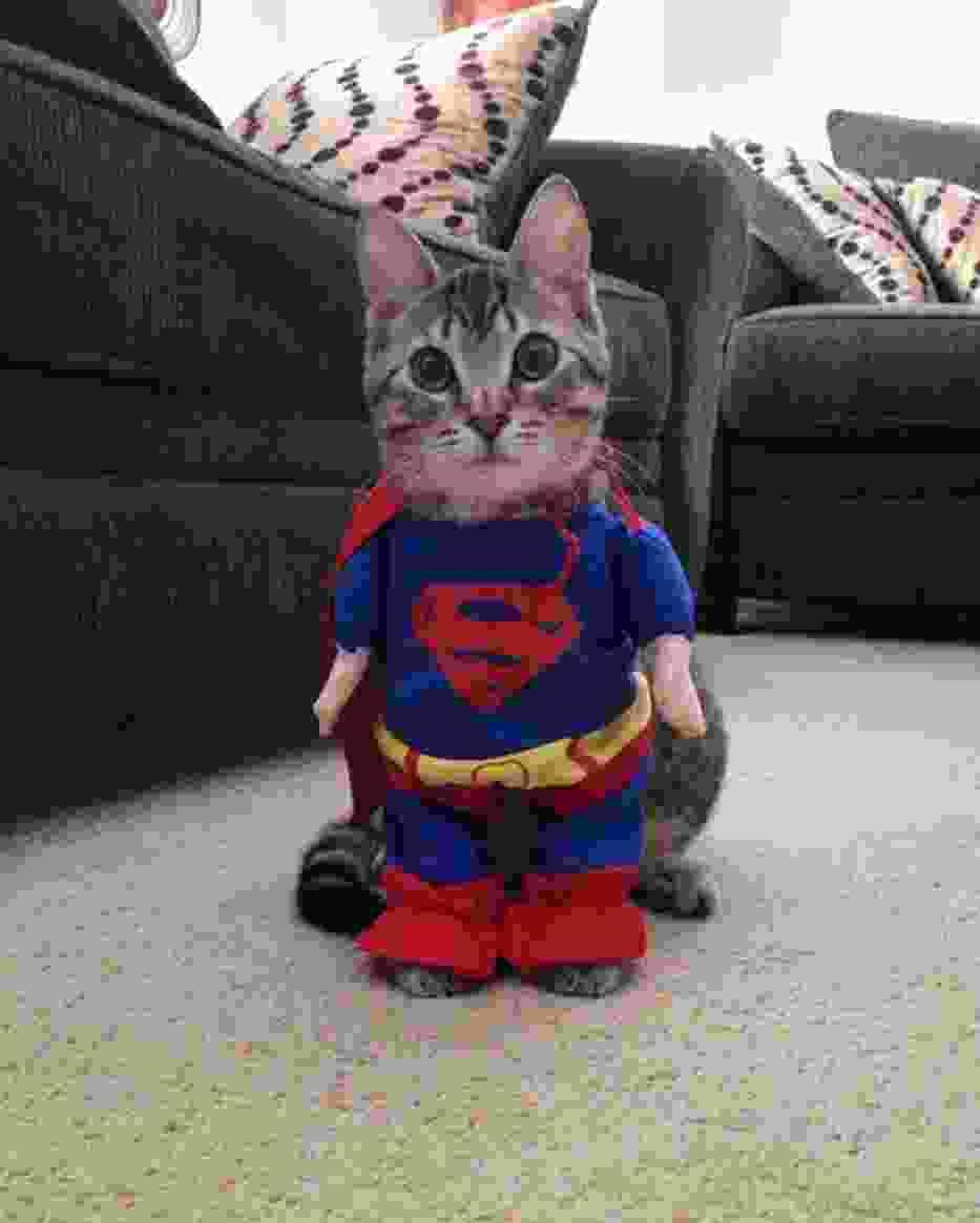 Zabawne przebrania kotów na Halloween. Uśmiejecie się! [ZDJĘCIE]