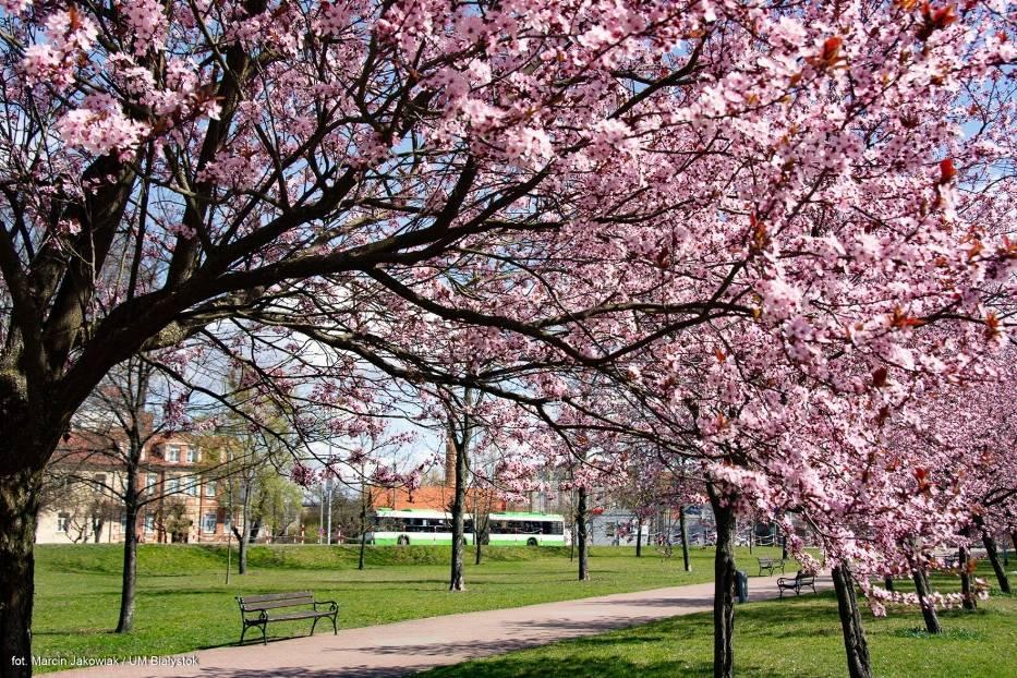 Wiosna 2020 w Białymstoku