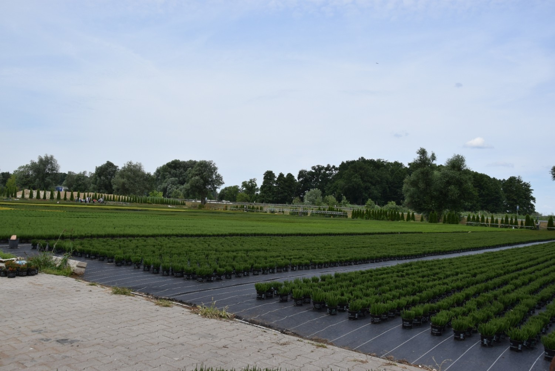 Przygotowanie do sezonu - 150 tys. sadzonek wrzosów