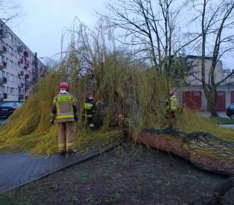 Straż pożarna w Zduńskiej Woli podsumowała tydzień. Co się działo?