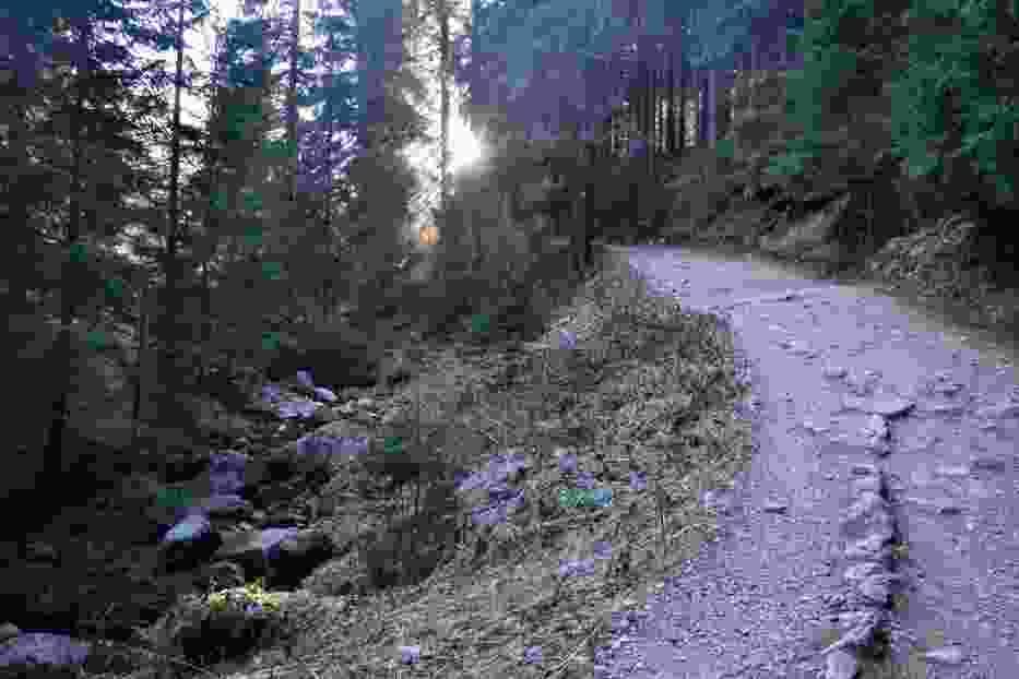 Szedłem ciemnym lasem