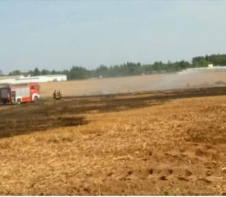 Pożar w Kosakowie: paliło się ściernisko   ZDJĘCIA