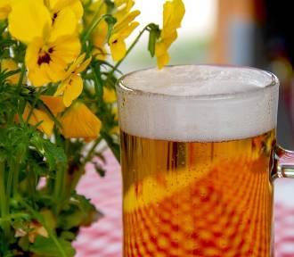 TOP 12 sposobów wykorzystania piwa. W domu, ogrodzie, dla urody!