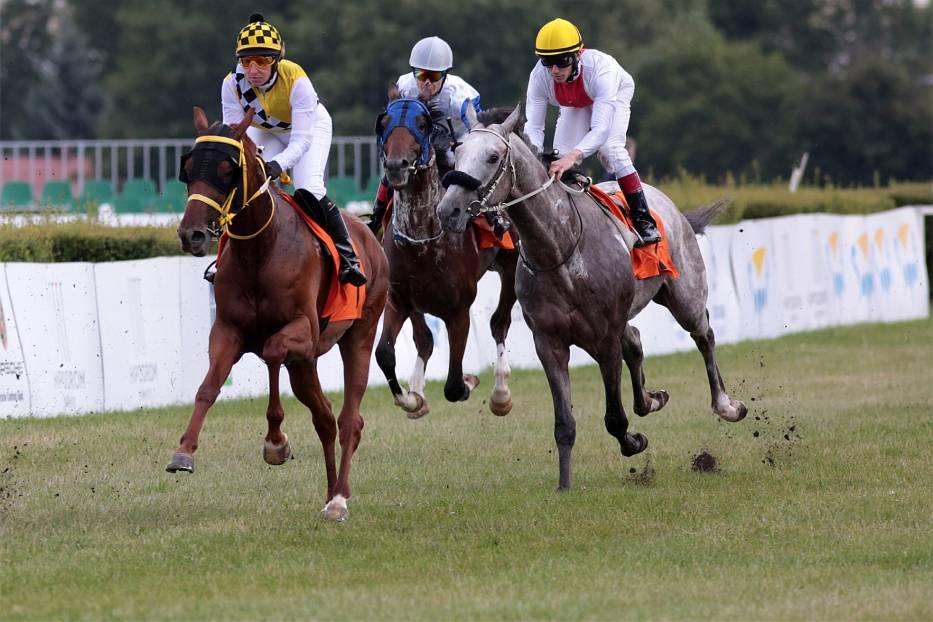Wyścigi konne Sopot 2017Poza tradycyjnymi już wyścigami konnymi w Sopocie w tym roku będzie można doświadczyć również innych atrakcji