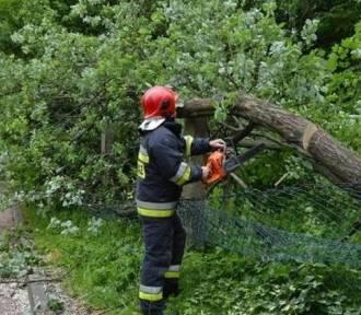 Powalone drzewo zablokowało linię kolejową Grudziądz - Toruń