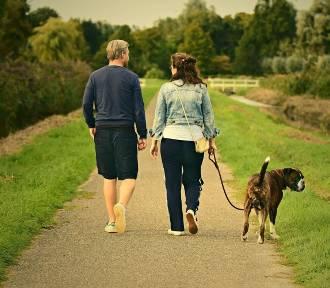 Gdzie na weekend z psem w Małopolsce? Najlepsze miejsca na wycieczki z pupilem