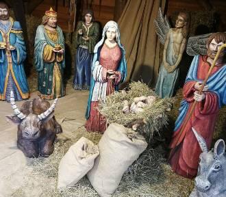 Szopki Bożonarodzeniowe w Toruniu [ZDJĘCIA]