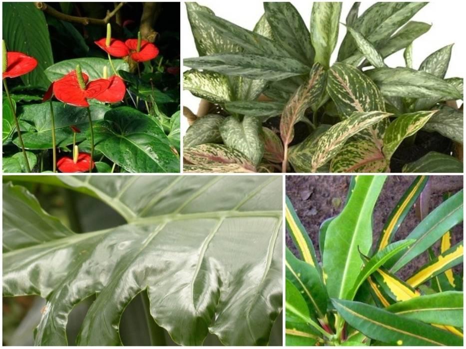 Trujące rośliny domowe. Lepiej nie trzymać ich w domu