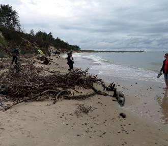Plaża Wschodnia w Rowach zniszczona przez sztorm. Czy będzie odbudowa? [ZDJĘCIA]