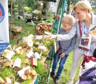 Festyn ekologiczny w parku przy brodnickim starostwie [zdjęcia]