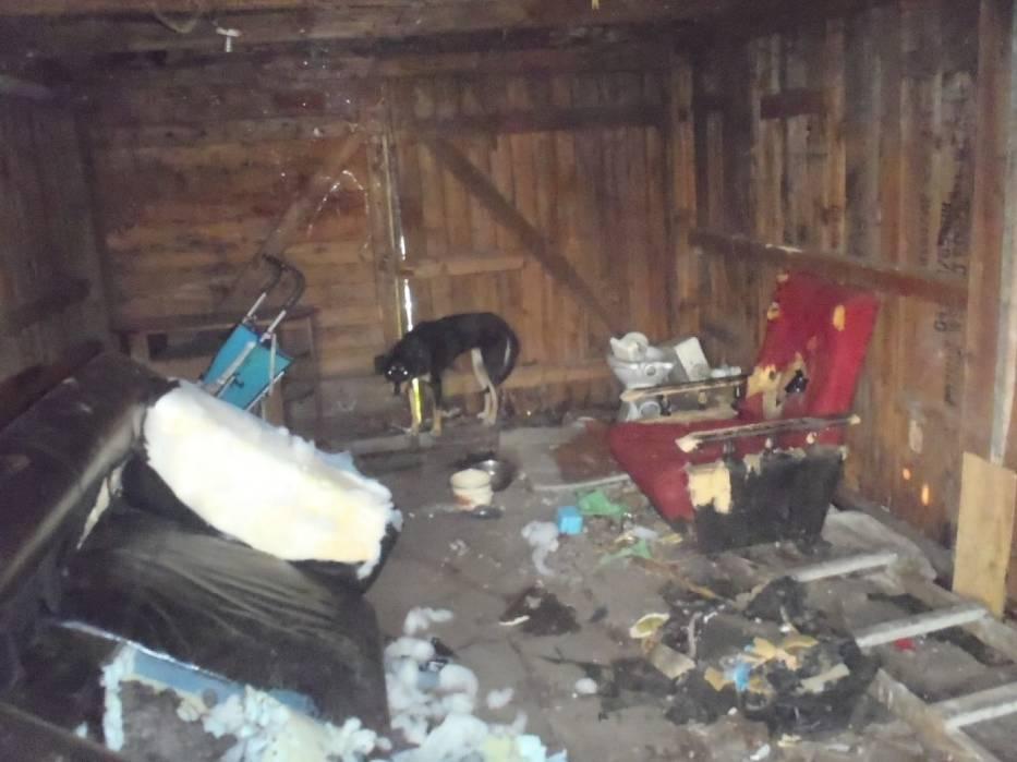 Głodzony i bity pies znaleziony w altanie przy Warszawskiej w Poznaniu